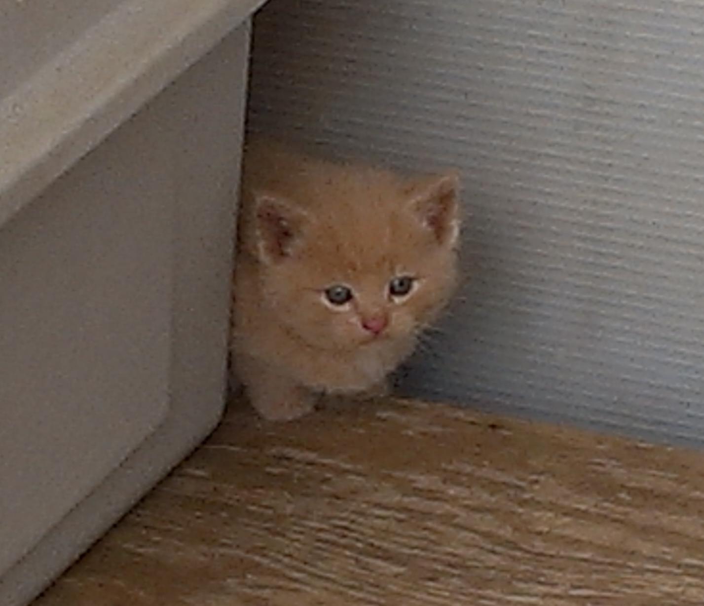 Afraid Just Like Kittens